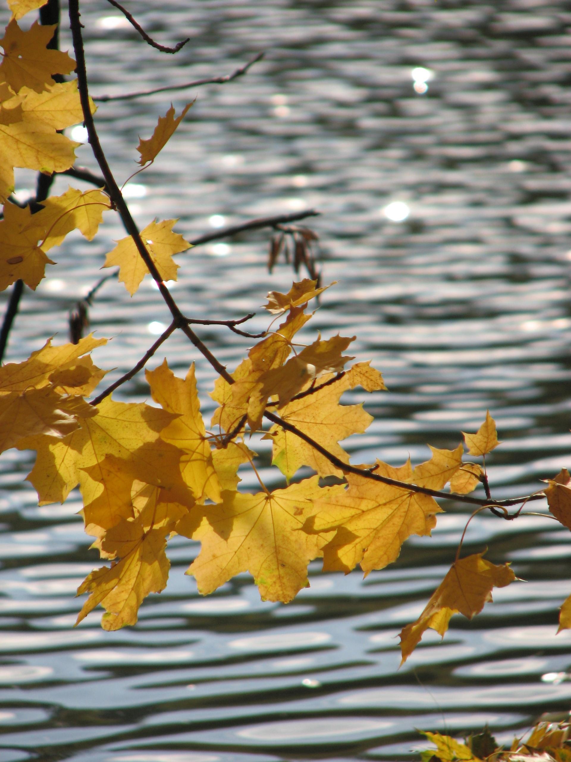 Ода Осени - Страница 2 577252