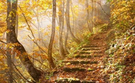 Ода Осени - Страница 2 579847