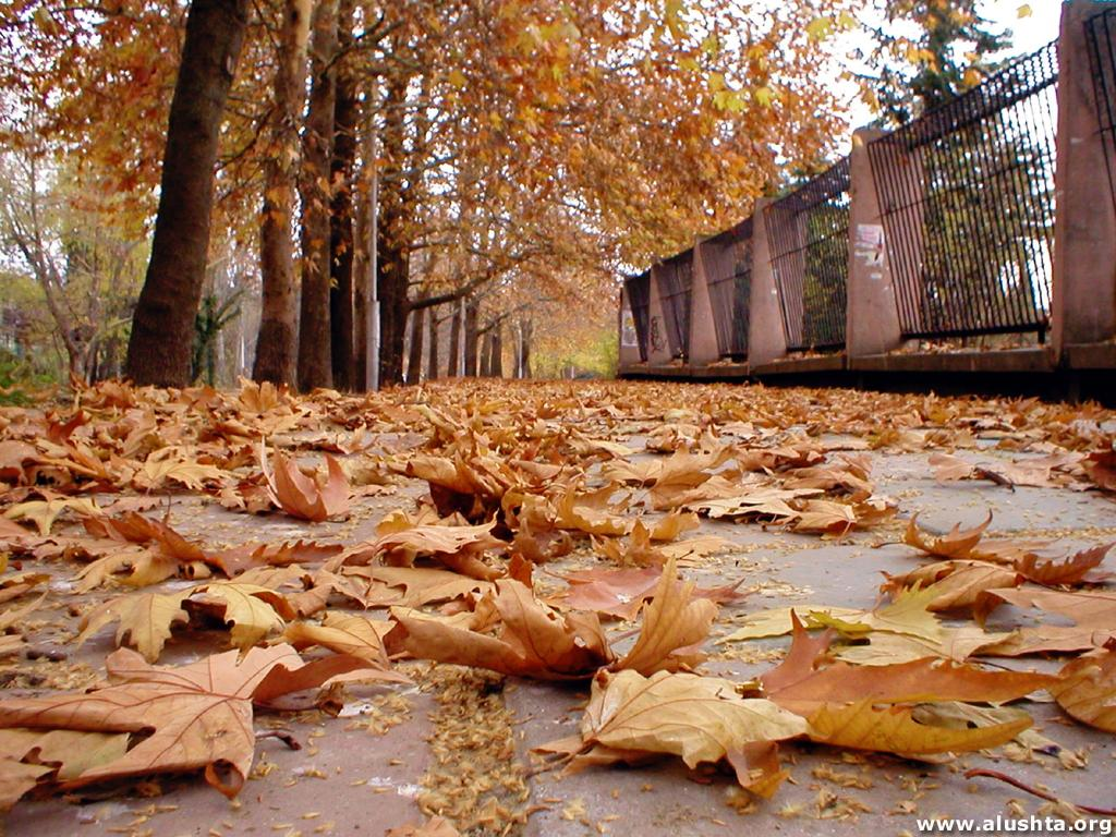 Ода Осени - Страница 2 580136