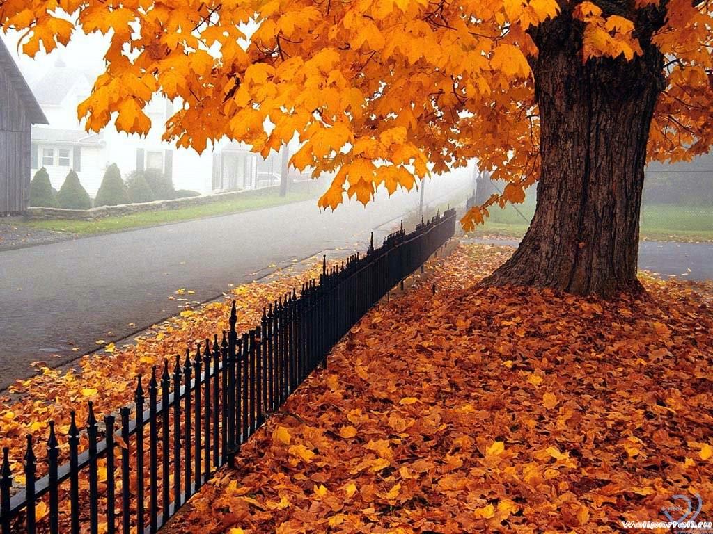 Ода Осени - Страница 2 580138