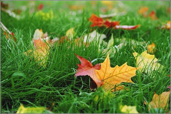 Ода Осени - Страница 2 580230