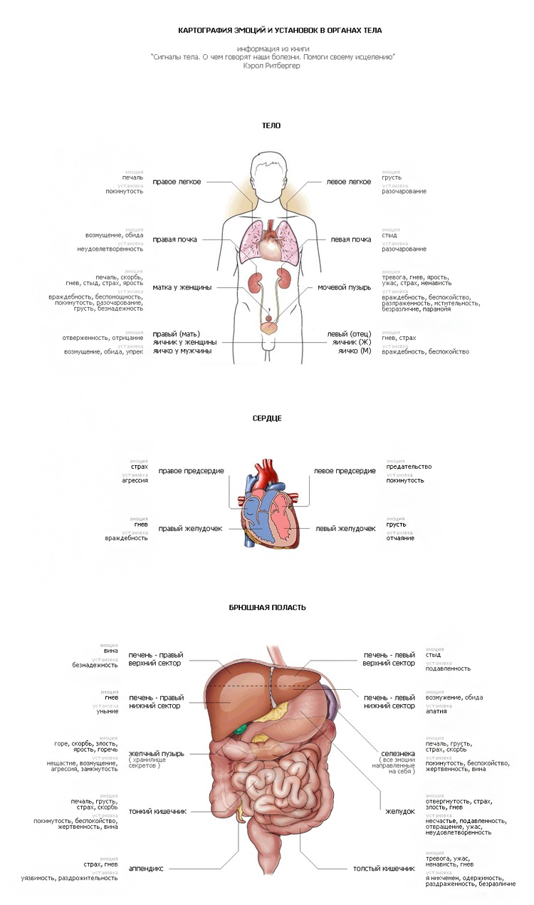 Картография эмоций тест по внутренним органам  1562336