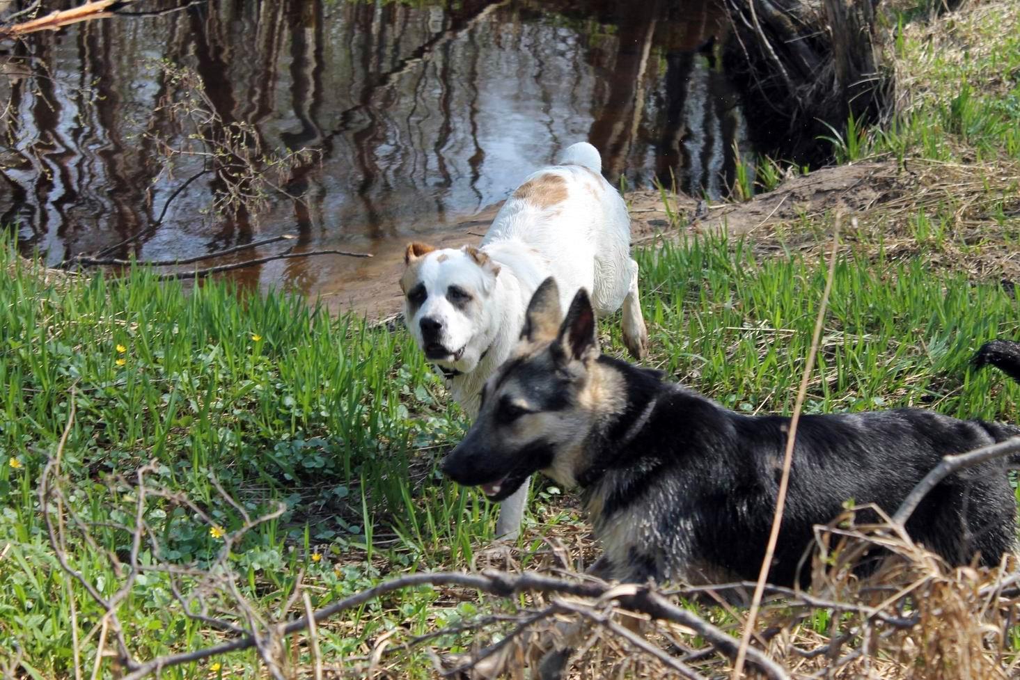 Мои собаки... и не только мои, и не только собаки =) 1884695