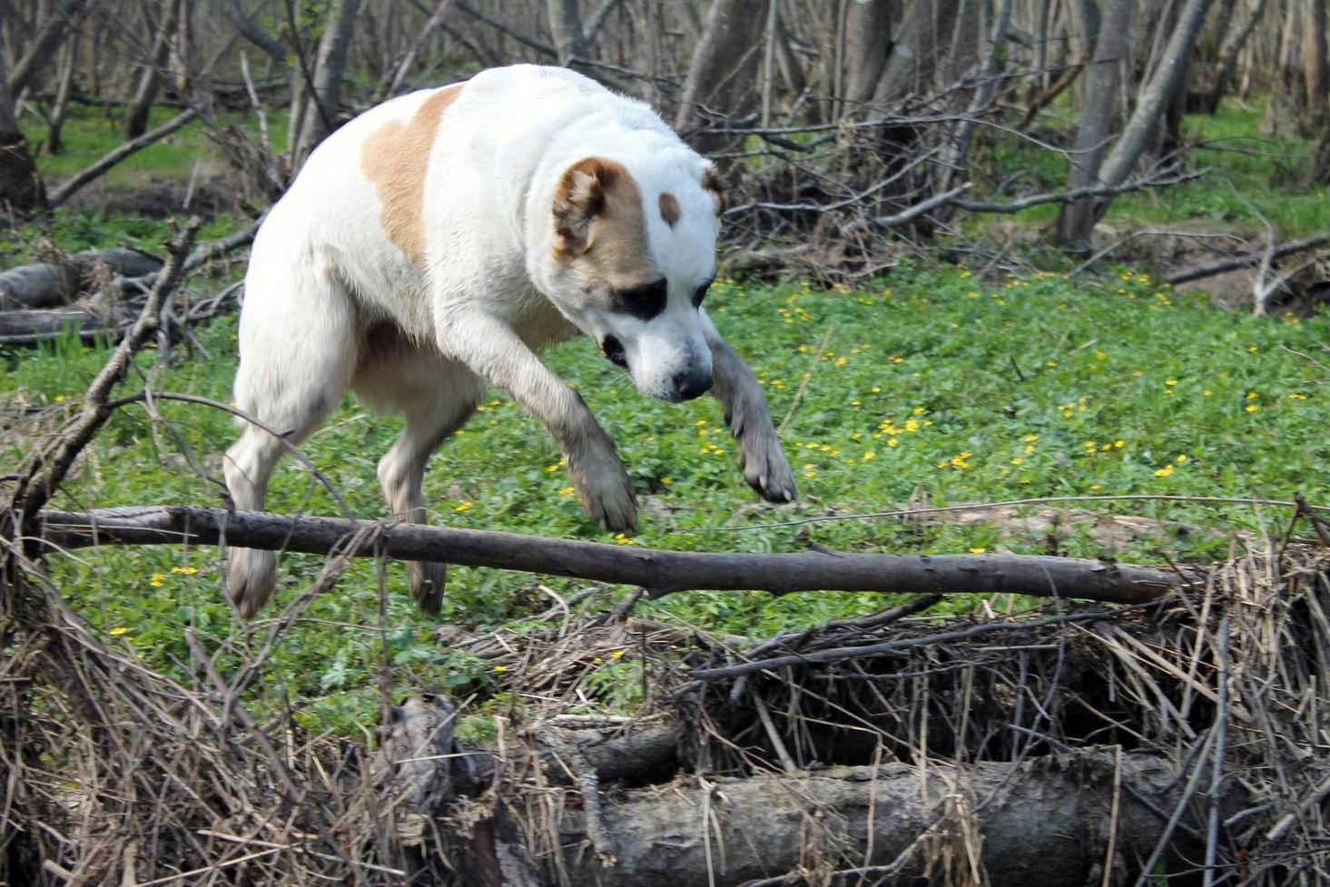 Мои собаки... и не только мои, и не только собаки =) 1884697