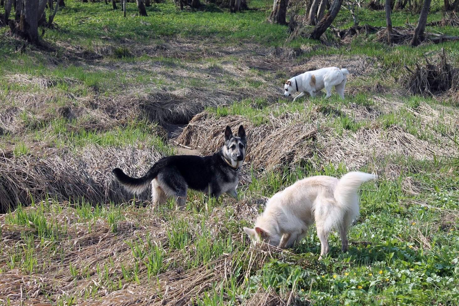 Мои собаки... и не только мои, и не только собаки =) 1884699