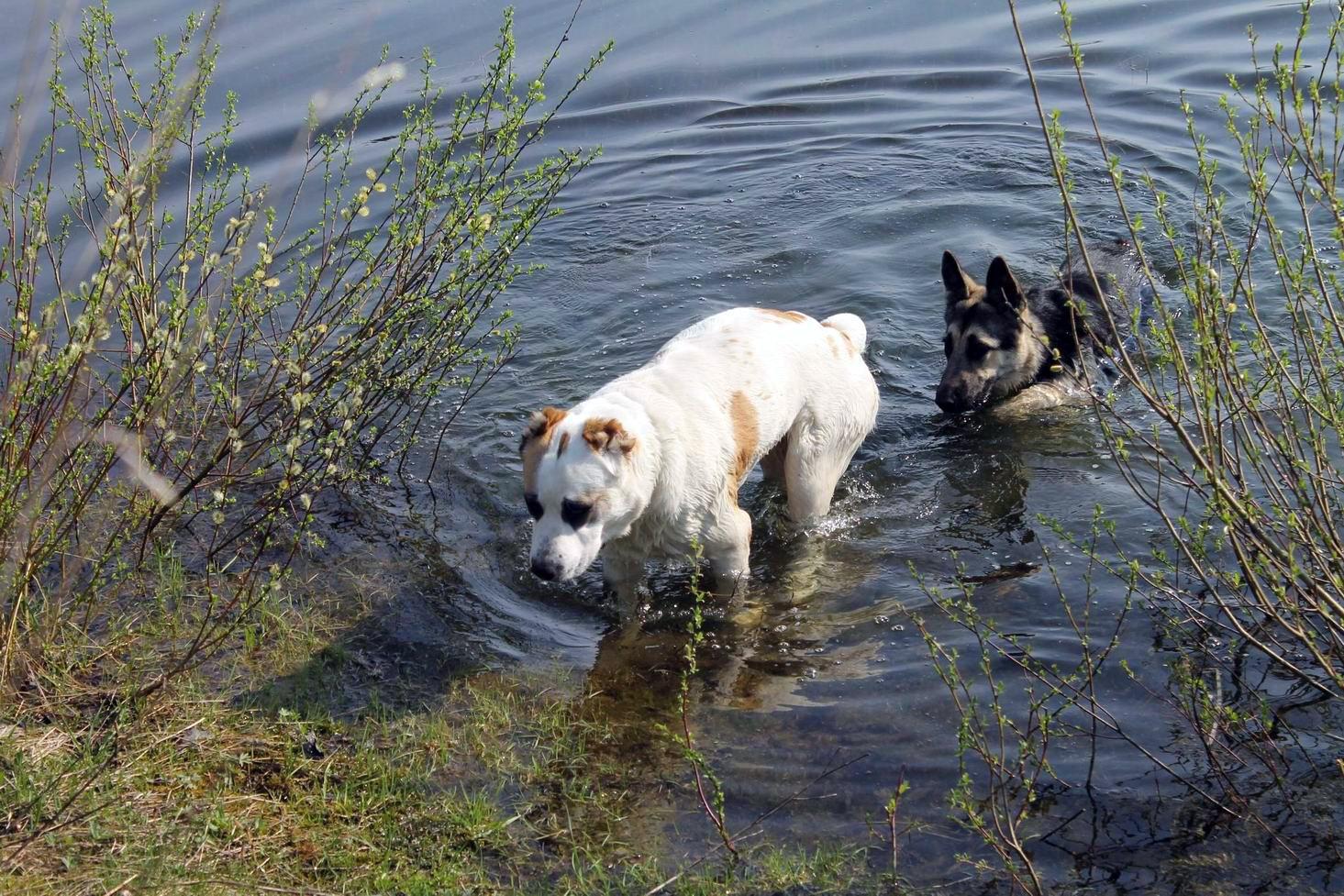 Мои собаки... и не только мои, и не только собаки =) 1884702