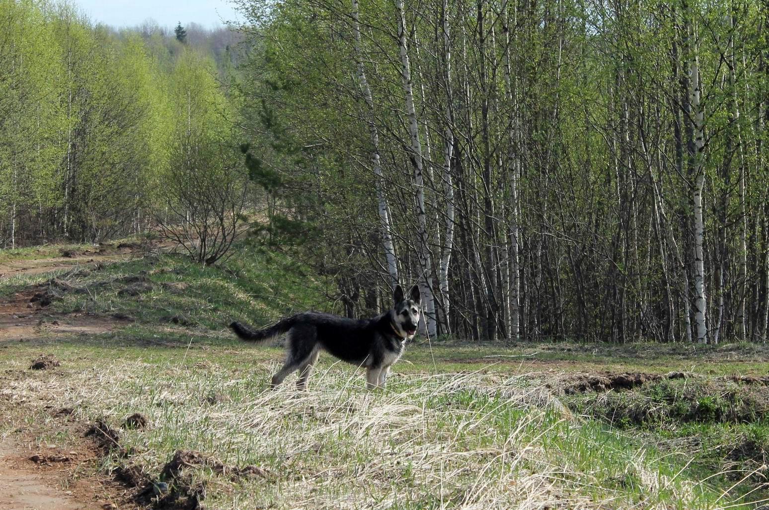Мои собаки... и не только мои, и не только собаки =) 1884722