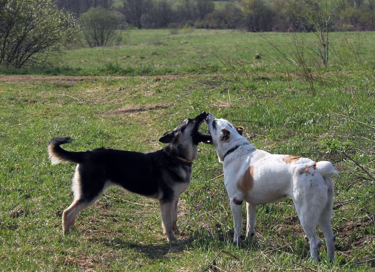 Мои собаки... и не только мои, и не только собаки =) 1884725