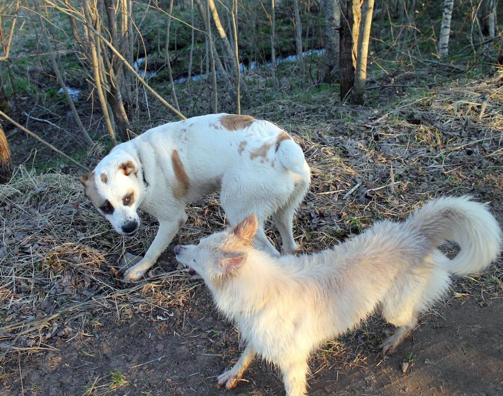 Мои собаки... и не только мои, и не только собаки =) 1884736