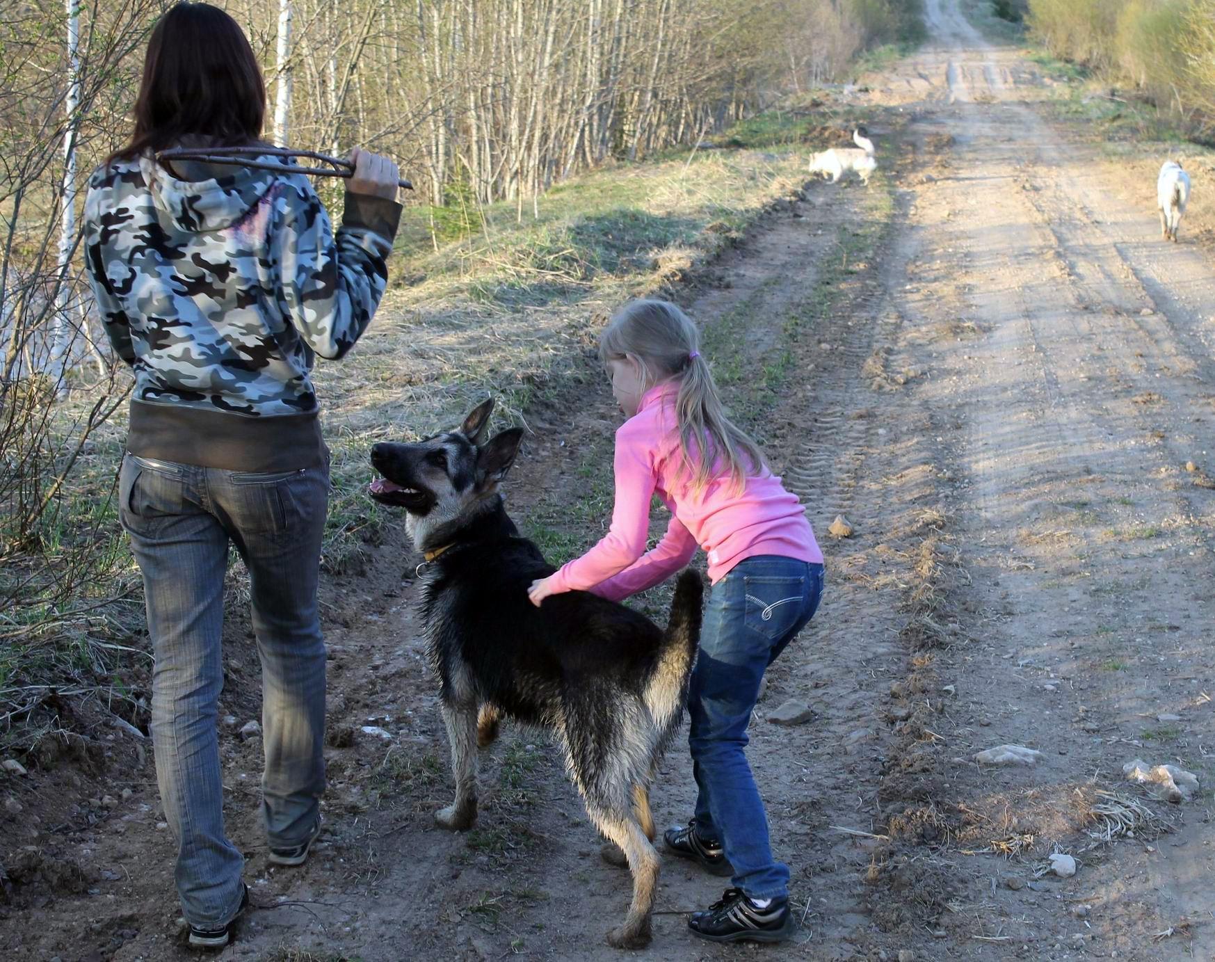 Мои собаки... и не только мои, и не только собаки =) 1884740