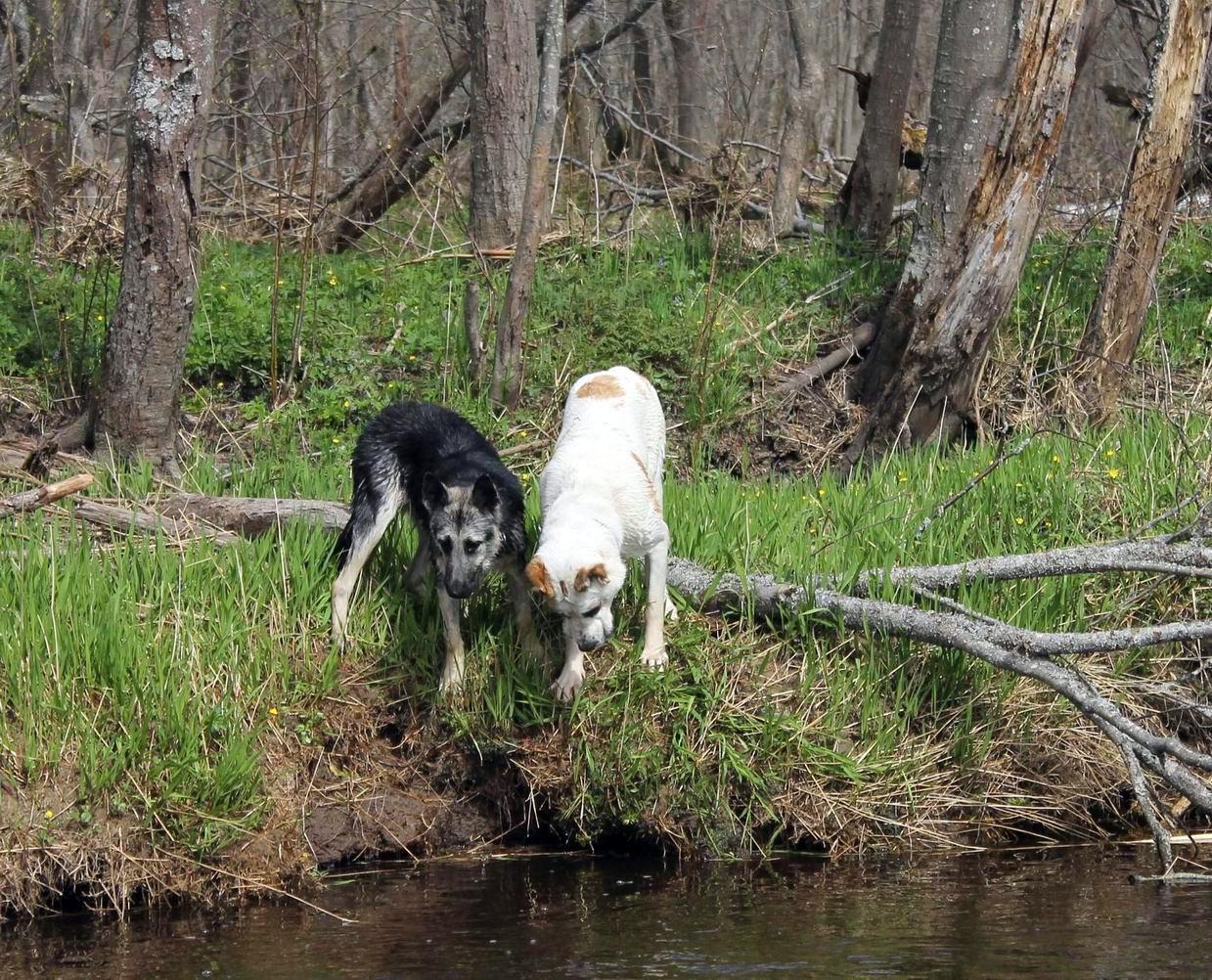 Мои собаки... и не только мои, и не только собаки =) 1884751
