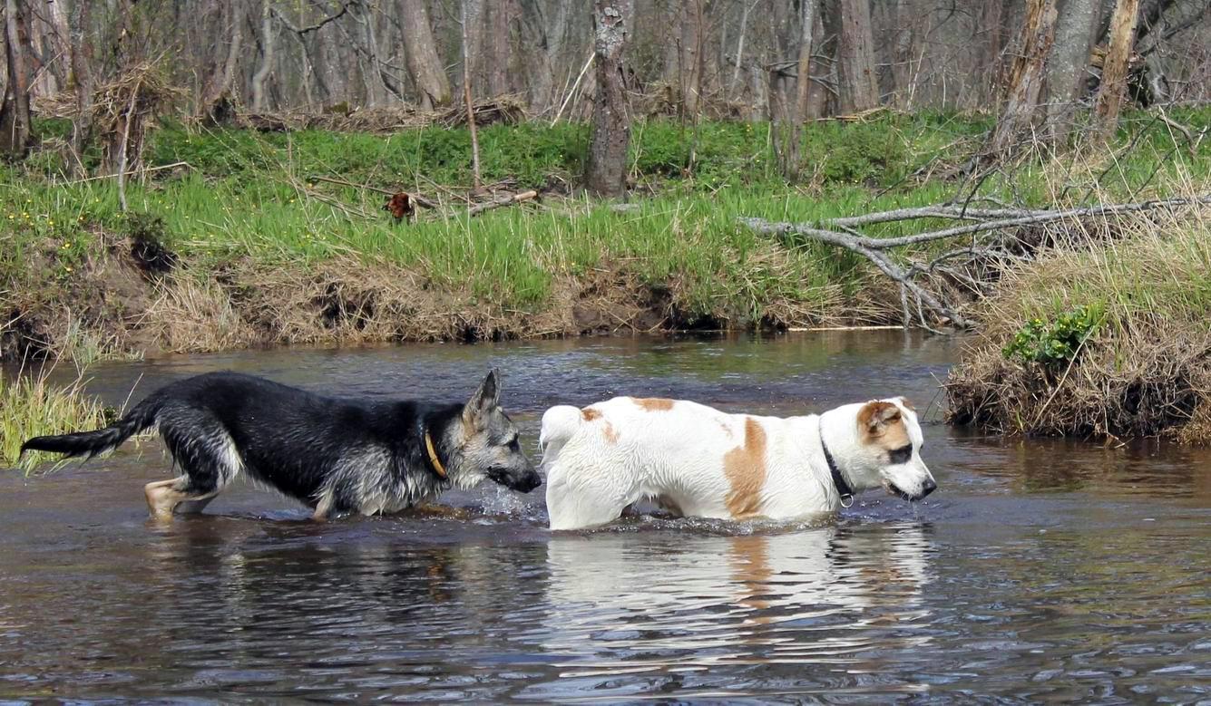 Мои собаки... и не только мои, и не только собаки =) 1884756