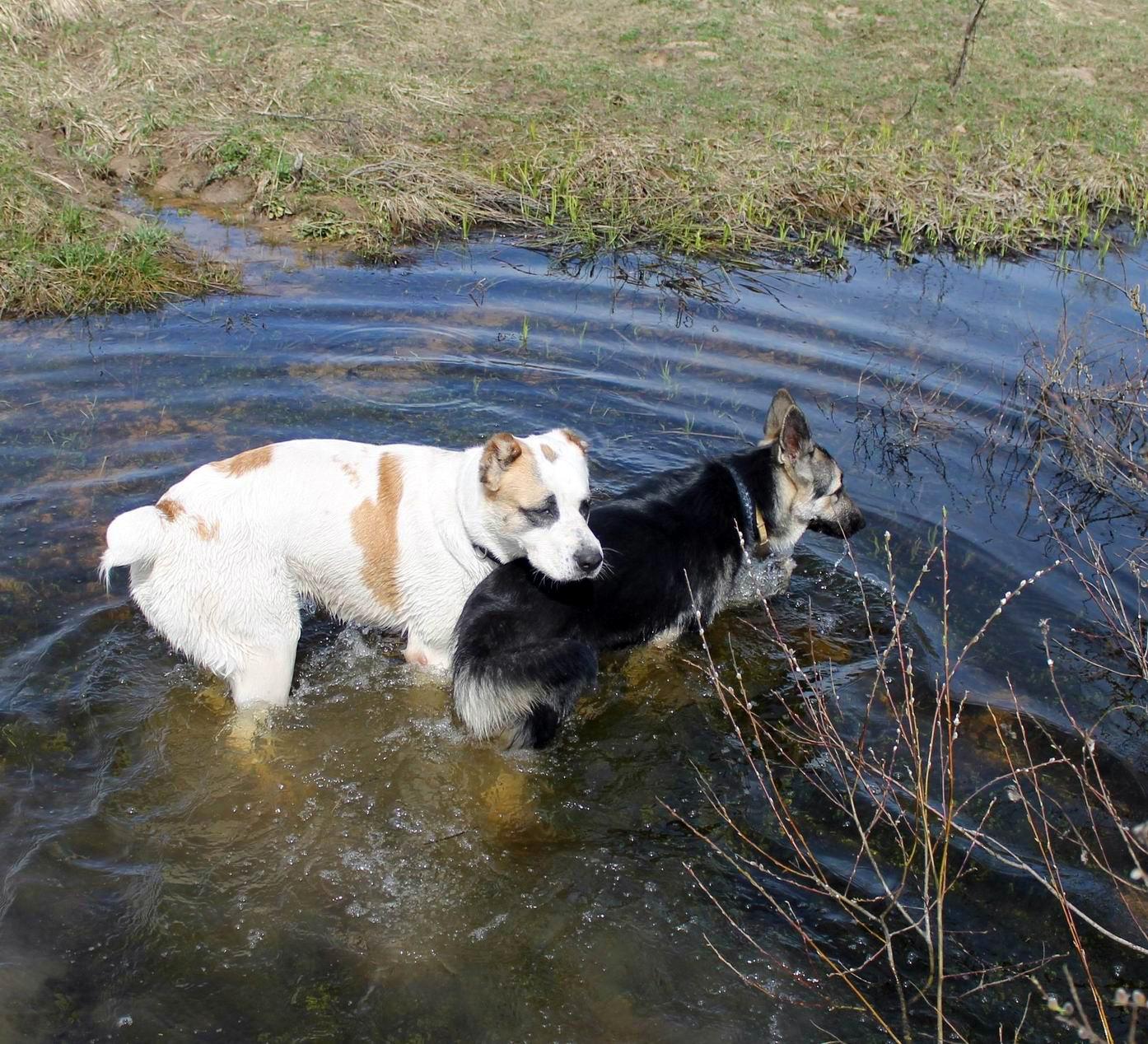 Мои собаки... и не только мои, и не только собаки =) 1884760