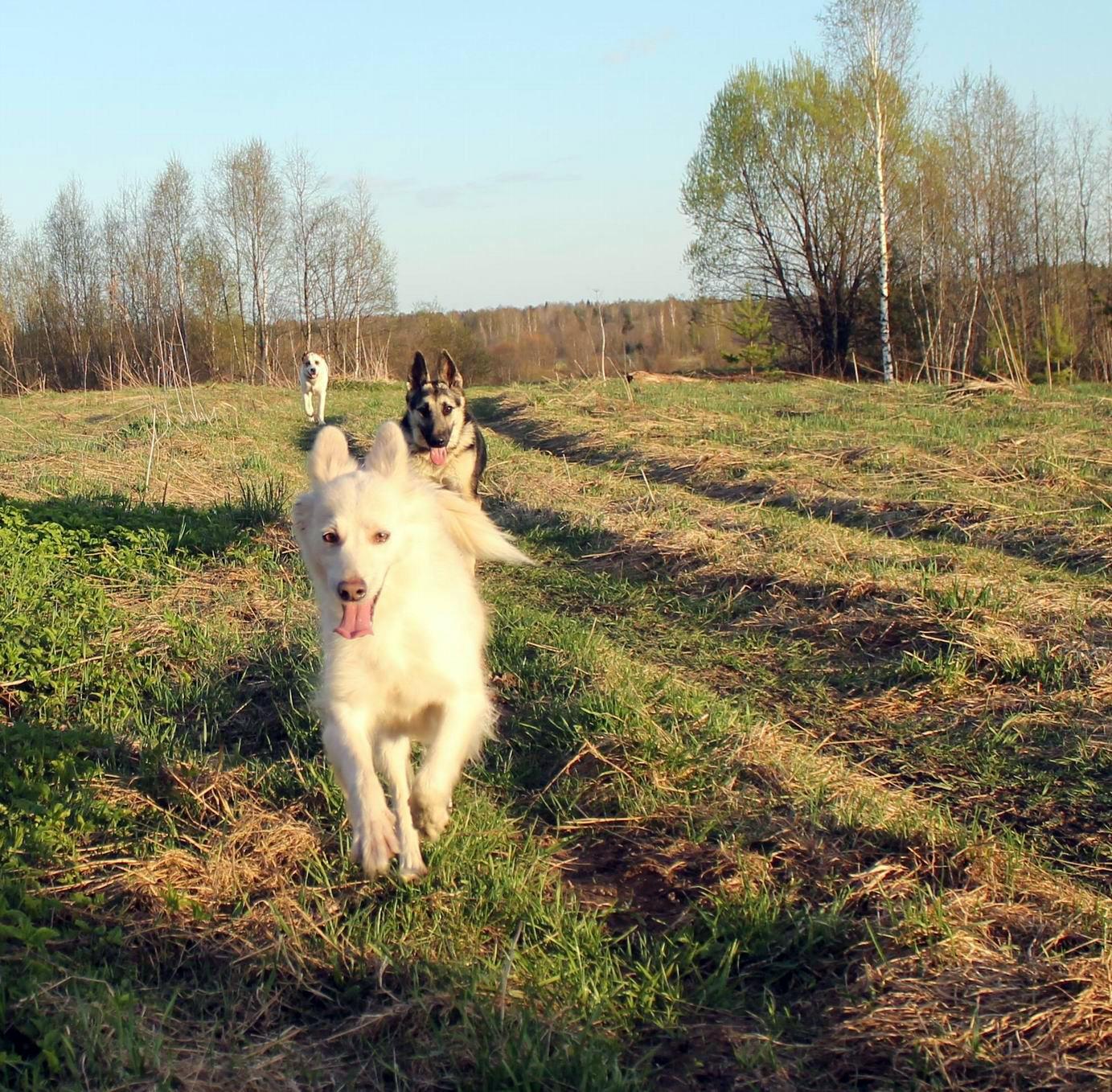 Мои собаки... и не только мои, и не только собаки =) 1884766