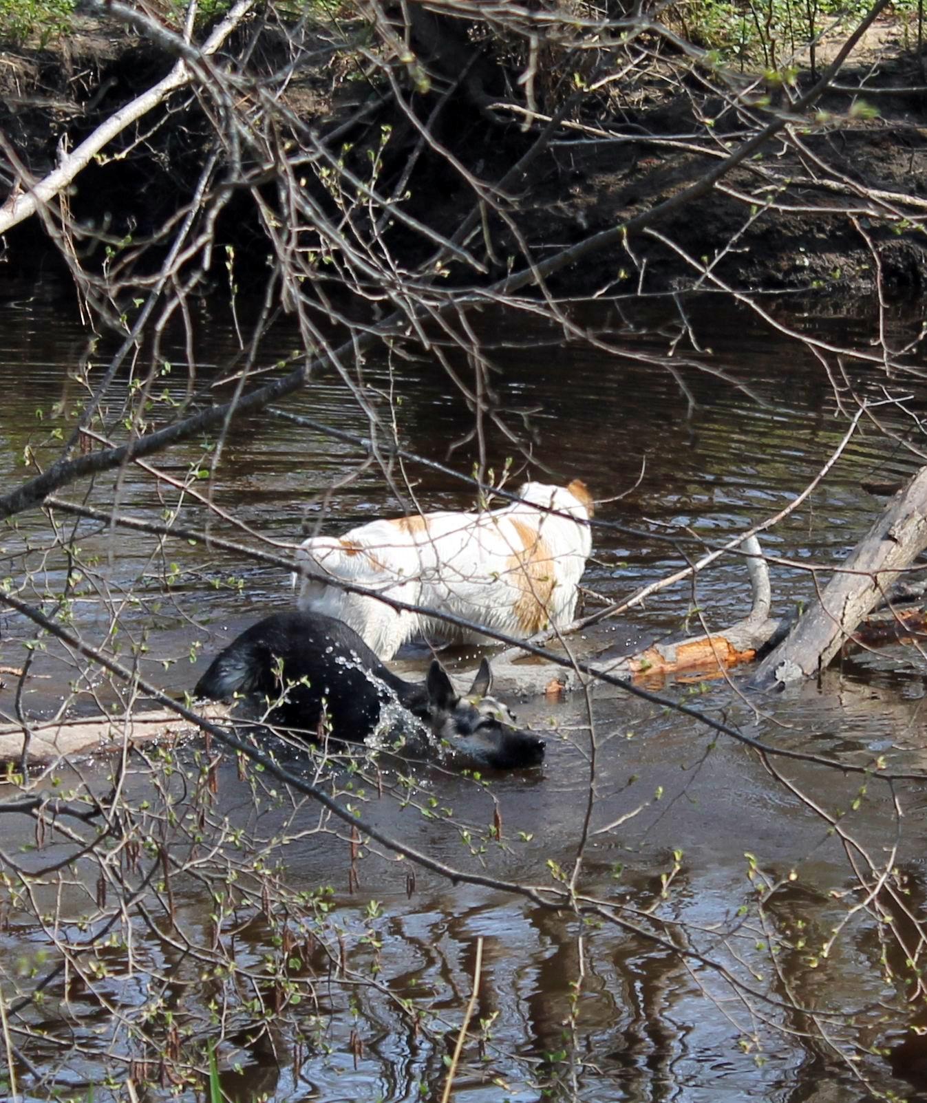 Мои собаки... и не только мои, и не только собаки =) 1884767