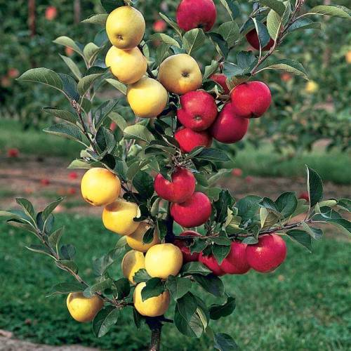 Volim voće - Page 25 Tumblr_og12jvs5Lv1rmxahho1_500