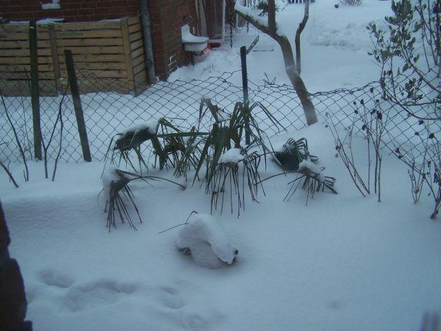 Palmen - Arecaceae  Bganka598g8t6730k