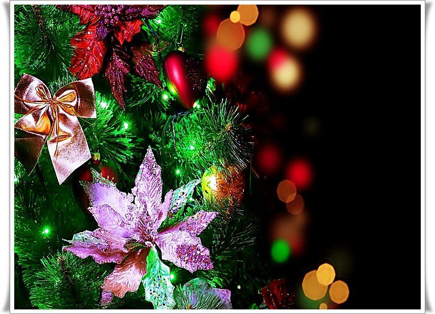 Bộ Sưu Tập Ảnh Giáng Sinh C85au7uam88k0gjpb