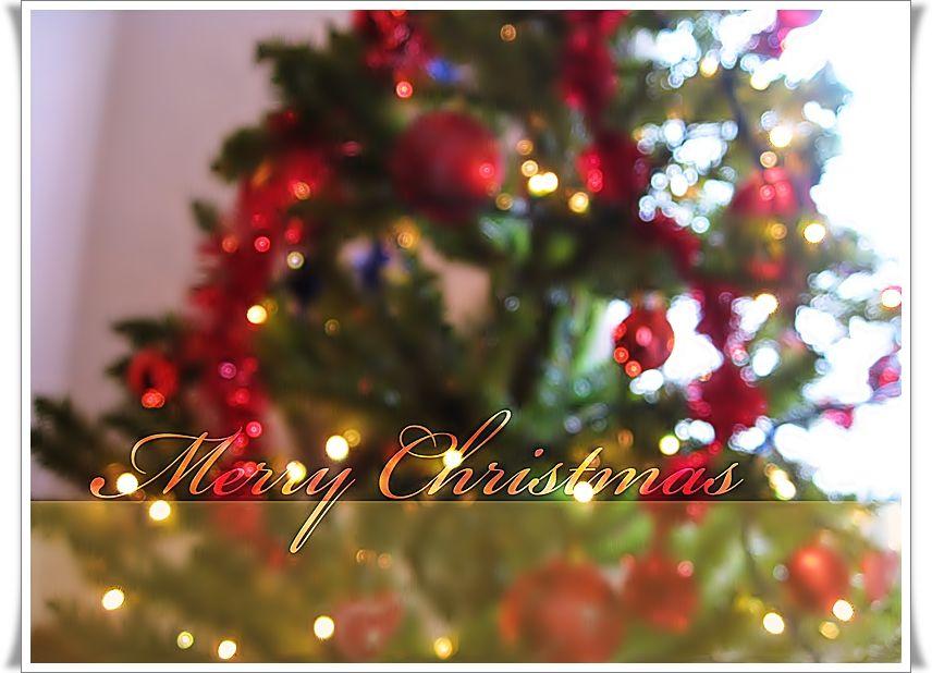 Bộ Sưu Tập Ảnh Giáng Sinh C85bbwmrdu674cy4f