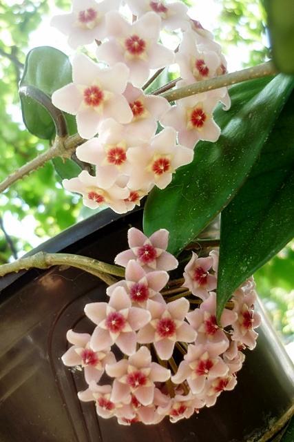 Blüten 2013 - Seite 5 Cehubazguuapz86kw