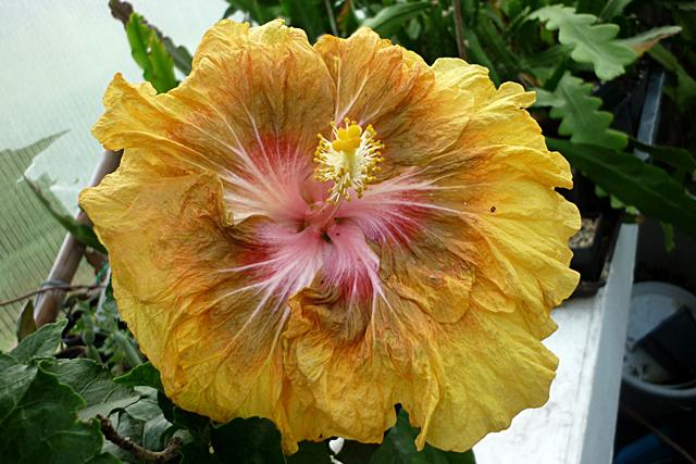 Blüten heute  Cswmhzfja4c22vlar
