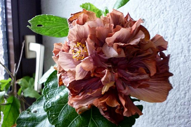 Blüten heute  Cswmjouo9jqsypehf