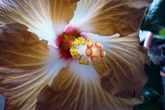Blüten heute  Cswmn1n475s1jiiz7