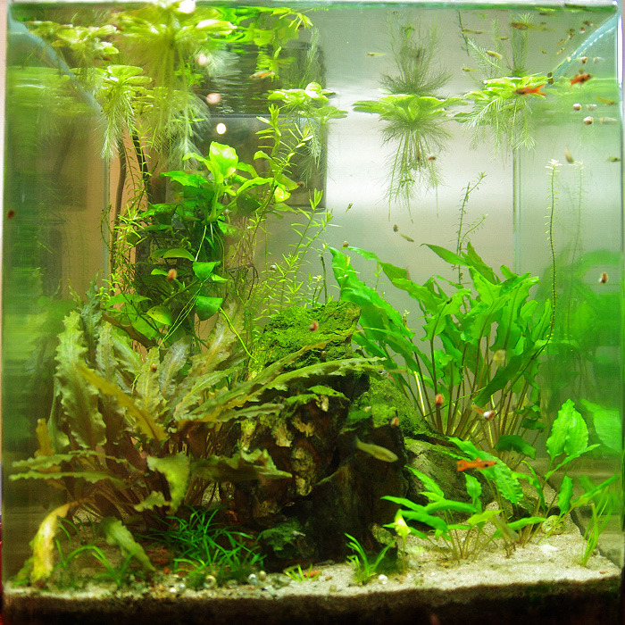 Nano 30L planté - Page 7 Tumblr_omtkmhqilX1u6kueno2_1280