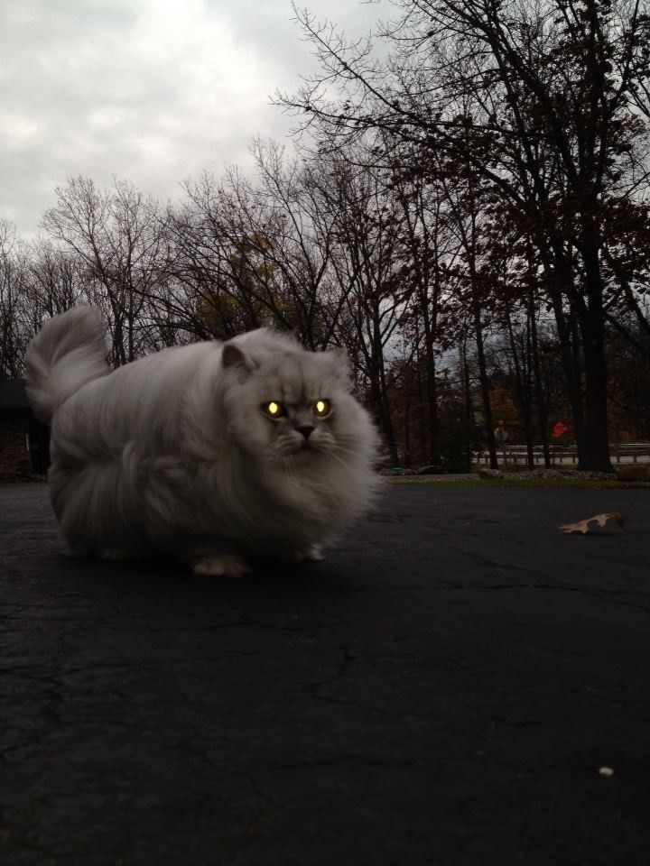 Et si nous étions des chats? Tumblr_me3tpf6T011qf1d5vo1_1280