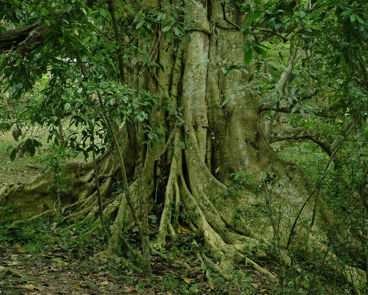Avalon's gardens - Page 2 Glorious-tree-01