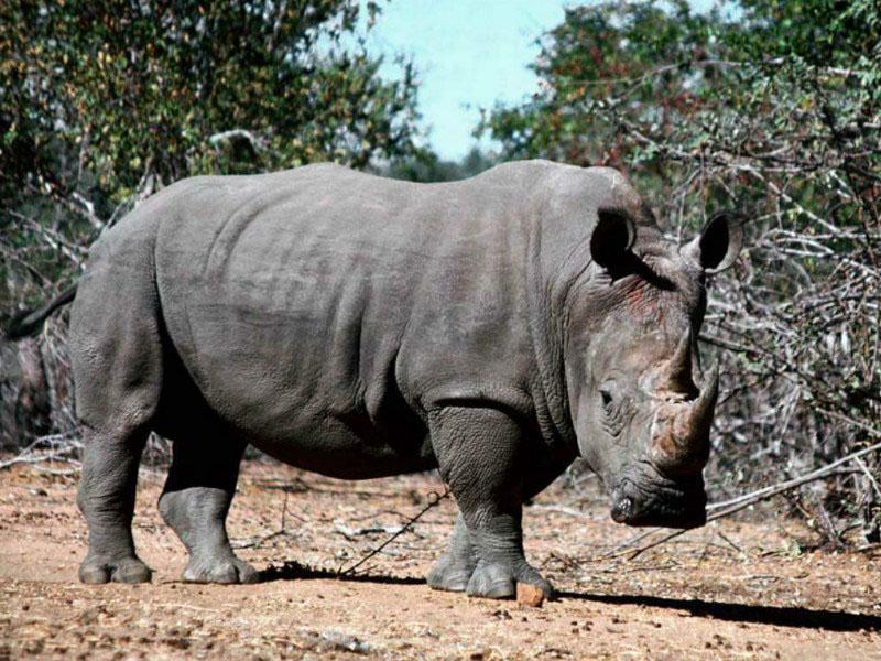 Jennifer Aniston on GQ! Rhino