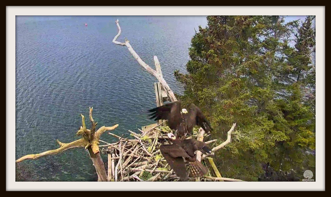 Wildtier-Livecams - Seite 26 Original