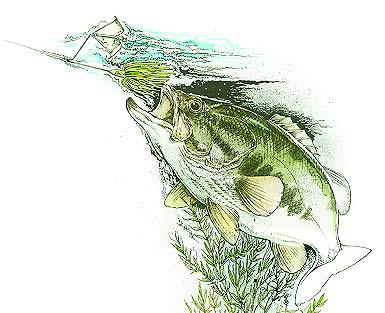 Escrito El Uso del Buzzbait para la pesca de la Lobina / Bass por José Mnauel López Pinto P2_Buzz_above_beyond_ill_BT_May04