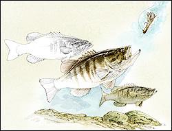 Fundamentos de Pesca con la armada Texas Rig por José Manuel López Pinto P2_g_Bass_Insider_show10a