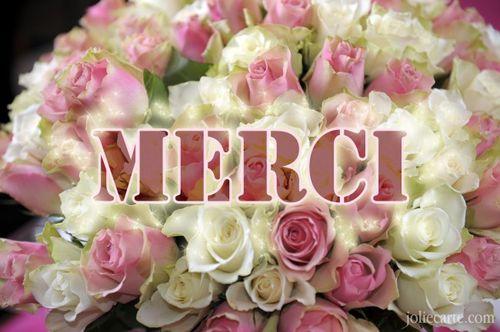 تعلم الفرنسية بدون معلم  Merci_rose
