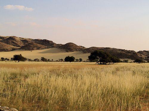 photo du lieu Plaine-d-afrique-du-sud