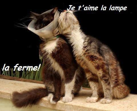 """Les """"Stupid Zèbres"""" c'est nous... - Page 18 Chat-lampe-"""