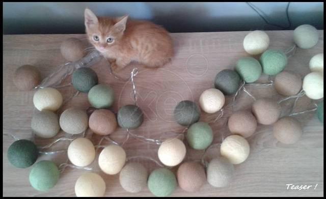 Υιοθετήστε τον καλέ!_ πορτοκαλένιος μικρός ψάχνει σπίτι! 182446_765419_d