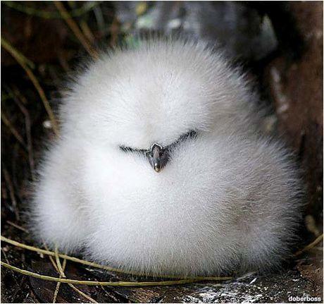 Les macs de la mignonnitude du règne animal Bebe-Oiseau