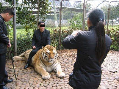 [Jeu] Association d'images - Page 4 Tigre_zoo_chine