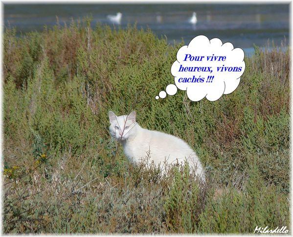 """Les """"Stupid Zèbres"""" c'est nous... Frontignan-chat-sauvage-humour-insolite-animaux"""