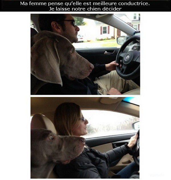 Humour et blagues - Page 10 Ma-femme-pense-qu-elle-est-meilleure-conductrice