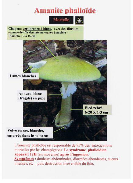[Jeu] Association d'images - Page 3 Amanite-phalloide-scan-001