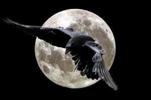 Le drapeau noir Corbeau-2-