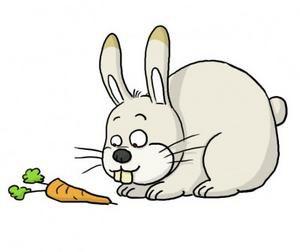 Les meilleures prises de son - Page 3 Lapin-carotte