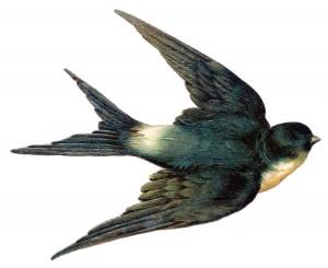 Forumaš iznad u liku životinje - Page 3 Swallow-bird-vintage-image-graphicsfairy007d-300x245