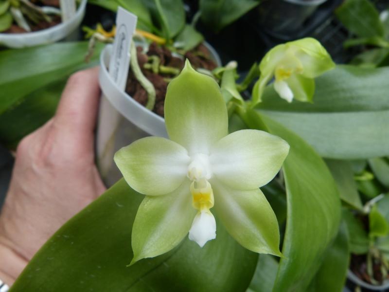 Besuch bei MSB Orchideen in Schwabach 0013wuc6