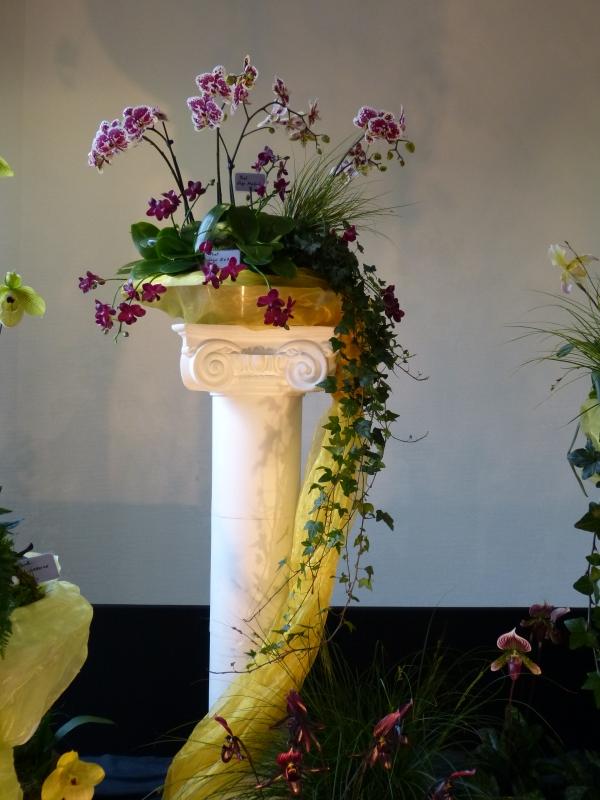 Neu-Ulmer Orchideentage 07.02.-09.02.2014   002k9jk9