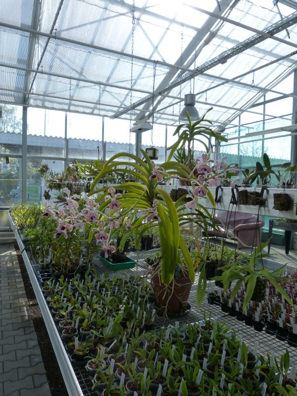 Ich war in Schwabach bei MSB Orchideen 0033ts0f