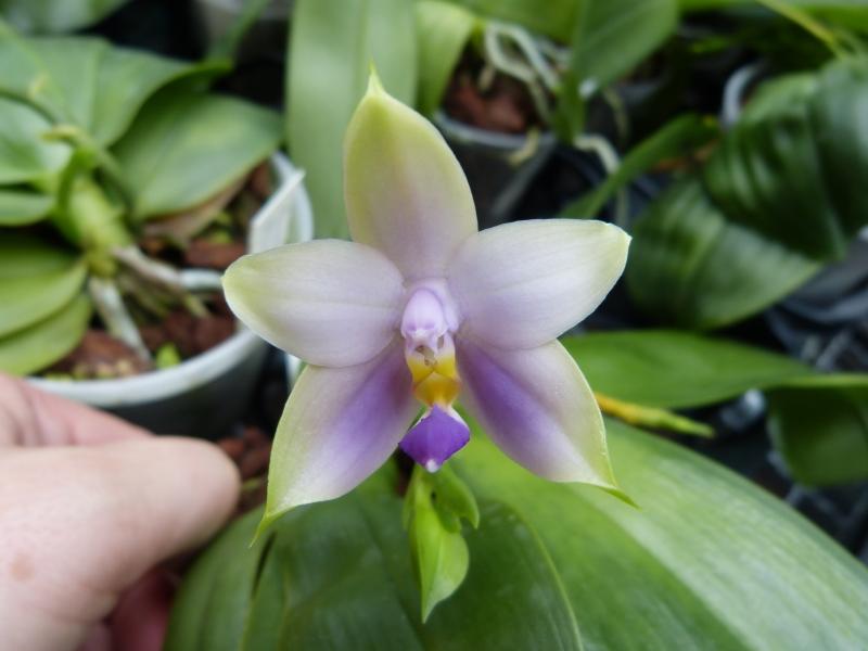 Besuch bei MSB Orchideen in Schwabach 003knu98